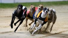 Don't miss our Night at the Dogs Sat 3rd Nov