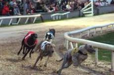 Night at the Dogs Sat Nov 3rd